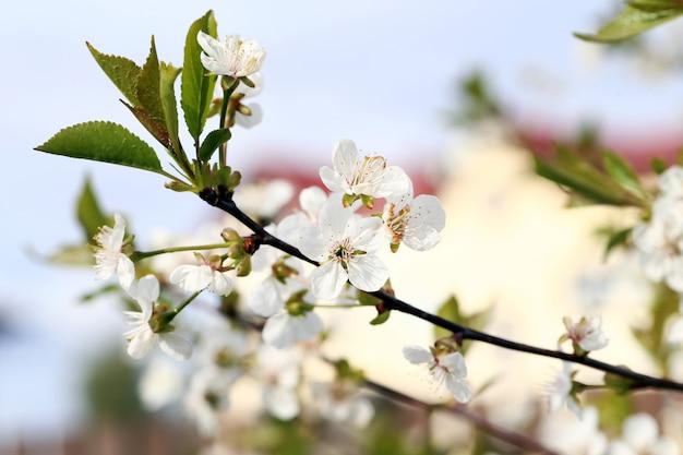 美しい花が咲く