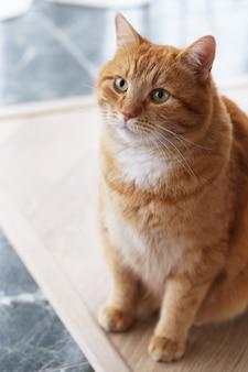 床にかわいい猫