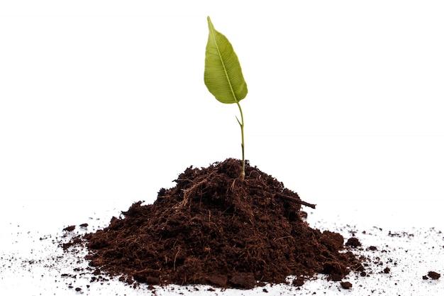 土壌中の小さな緑の芽
