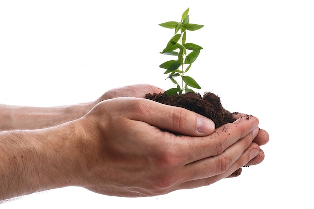 Мужские руки с зеленым ростком