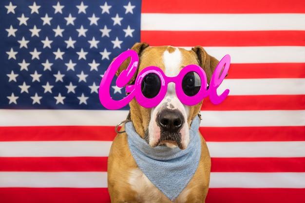 Американская концепция дня независимости, со стаффордширским терьером и флагом звезд и полос