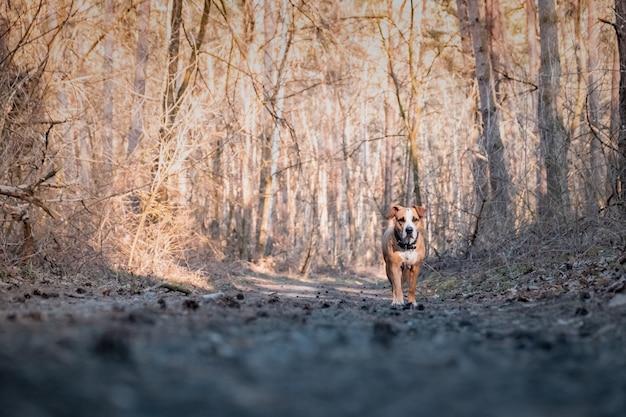 歩道を歩いている森の中の犬。素敵な春の日の森の散歩で混血犬