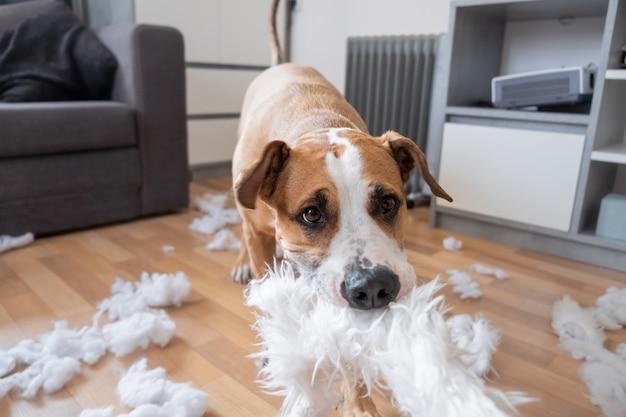 Собака разрушает пушистую подушку дома.