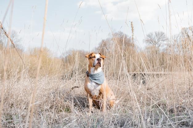 自然の中で時間を過ごす犬の肖像画。