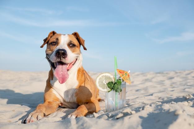 ビーチでのかわいい犬と冷たいカクテルドリンクのグラス。