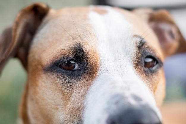自然条件で屋外の犬の目のマクロの表示