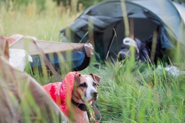 キャンプ場でカヌーボートの前の寝袋に犬が横たわっています。