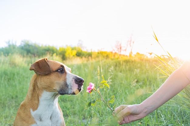 人間はかわいい子犬を与えて屋外で野生の花を嗅ぎます