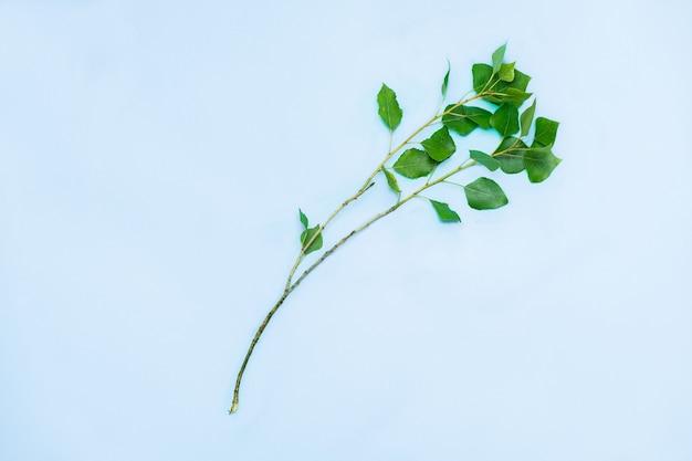 青い表面の緑の葉とポプラの若い細い枝