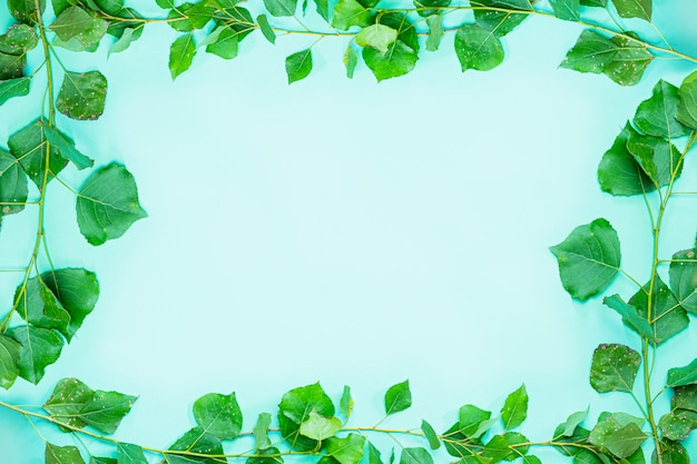 新鮮な緑のポプラの枝と葉のフレームの背景で構成される緑のフレーム