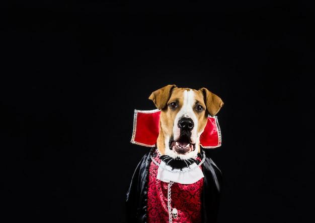 Собака в костюме хэллоуина