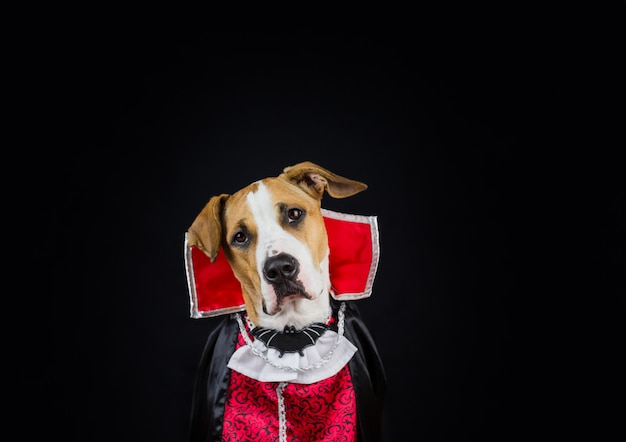 ハロウィーンの衣装の犬