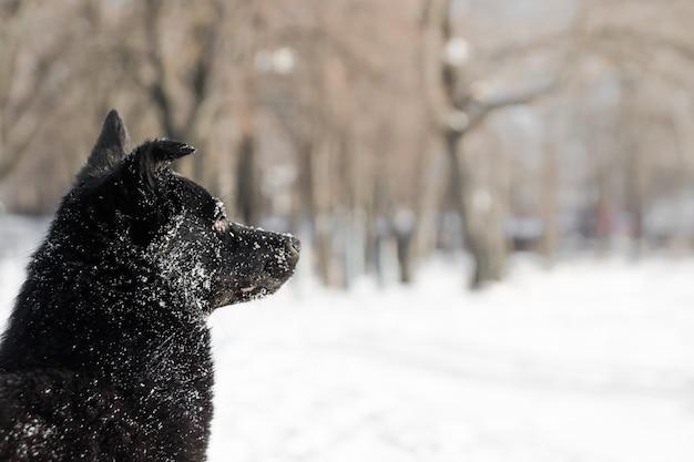 白い雪の中で黒犬