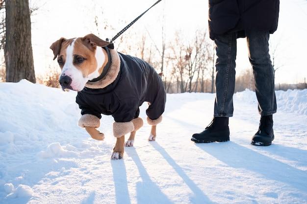 寒い冬の日に暖かいコートで犬と一緒に歩いています。公園で綱を引っ張る犬を持つ人