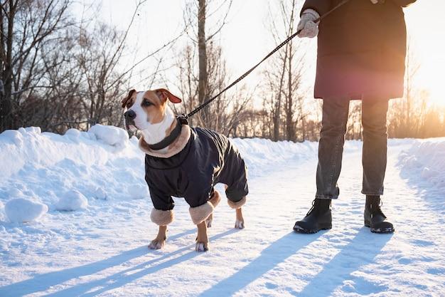 寒い冬の日にコートを着た犬と一緒に歩いています。公園でひもに暖かい服装で犬と人
