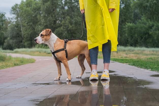 Прогулка с собакой в желтый плащ в дождливый день. самка и стаффордширский терьер на поводке стоят на асфальте с лужами в городском парке в плохую погоду