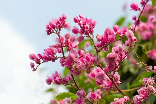 ぼやけて背景に分離されたピンクの花の花