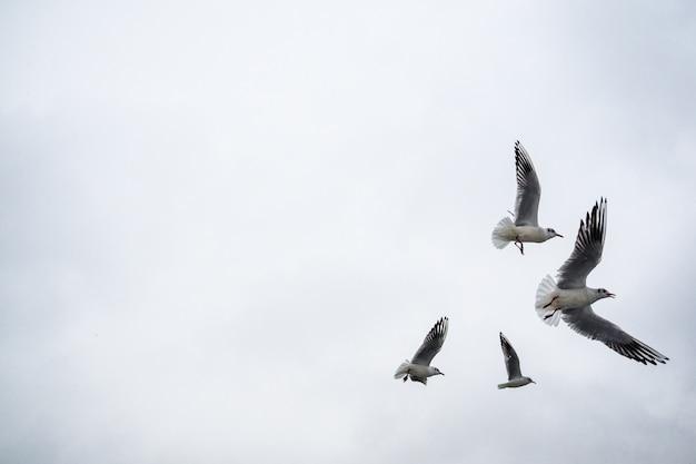 Чайки летают над озером. идет снег, зима пришла