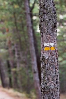 経路を示す信号が描かれたツリー