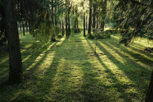 夕日の光線で魔法の森