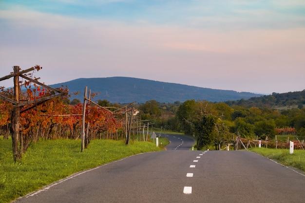 日没時のブドウ畑。道路は山までの距離に伸びています。スロベニアの秋。