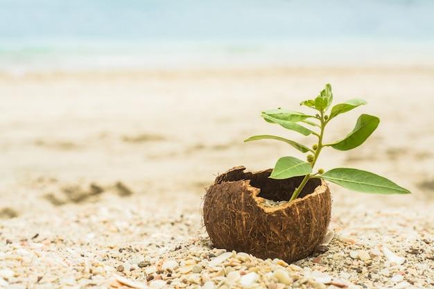 Кокос с растением, жизнь