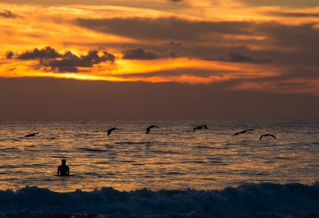 Пляж заката и силуэт человека и птицы