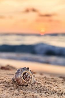 Спиральная раковина на песчаном тропическом пляже на восходе солнца в мексике, вертикальная композиция