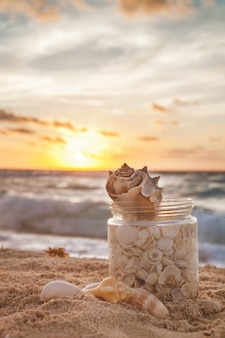 Морские раковины, собранные в травяной банке летом