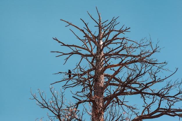 青い空を背景に大きな古い木