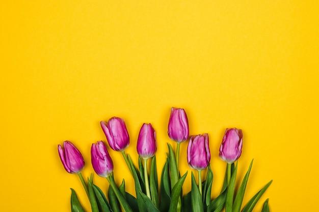 Розовые фиолетовые тюльпаны над желтой стеной