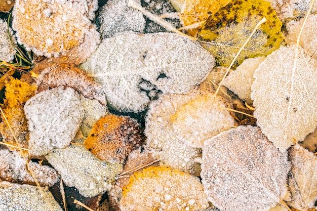 乾燥した葉を覆う霜の平面図