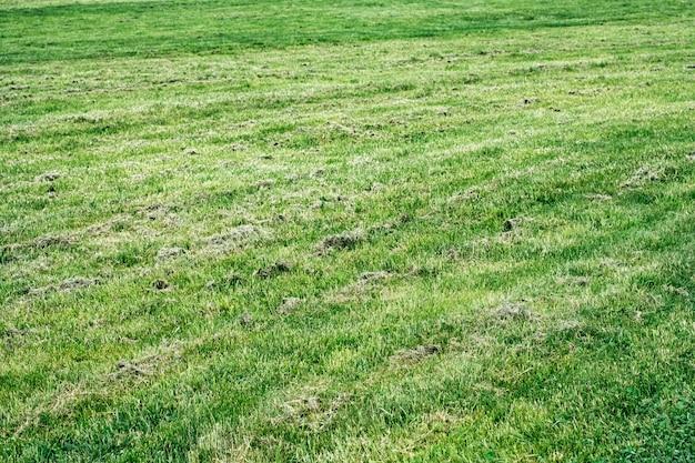 庭の乾いた芝生
