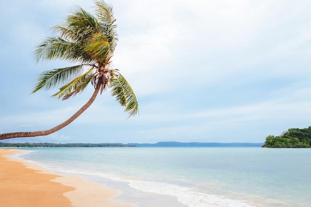 美しいビーチ。手のひらで素敵な熱帯のビーチの眺め。休日と休暇の概念