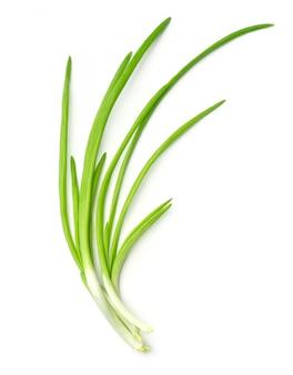 Свежий зеленый лук на белом фоне