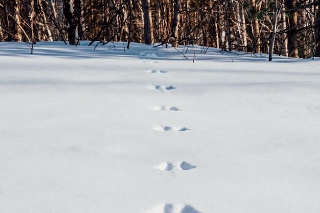雪に覆われたノウサギの痕跡