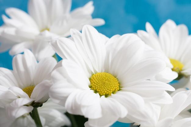 カモミールの花束をクローズアップ