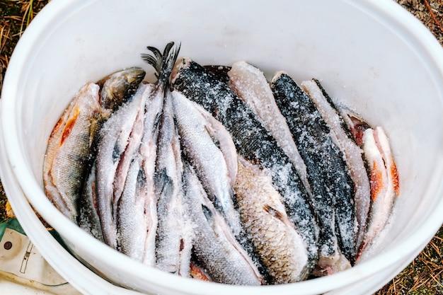 Много сырой свежей соленой рыбы. вид сверху