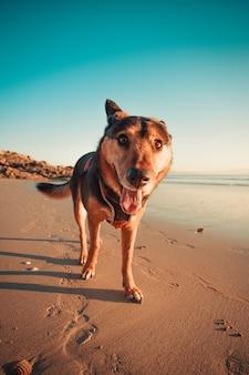 Улыбающаяся собака на пляже