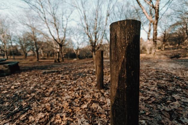 Осенние тотемы в лесу