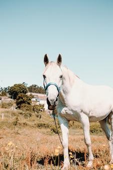 Полное тело белой лошади в солнечный день