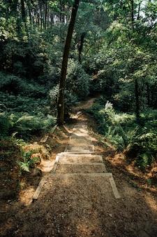 Лестница посреди леса сверху