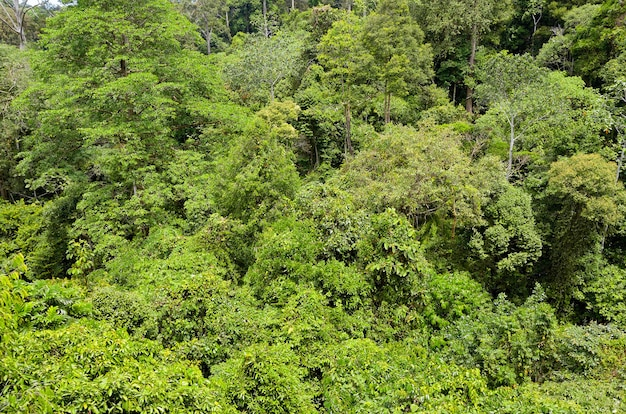 熱帯雨林のジャングル