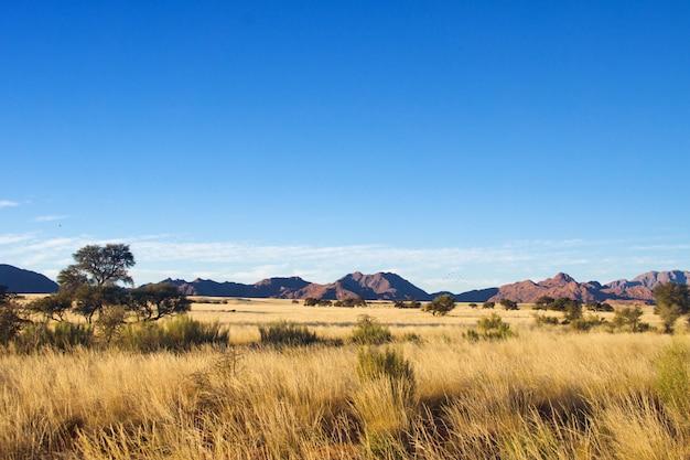 Африканский пейзаж саванны, намибия, южная африка
