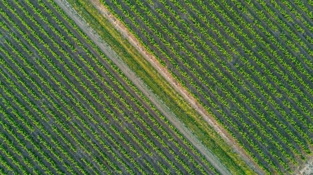 上記の背景、南フランスからのブドウ畑の風景の空中のトップビュー