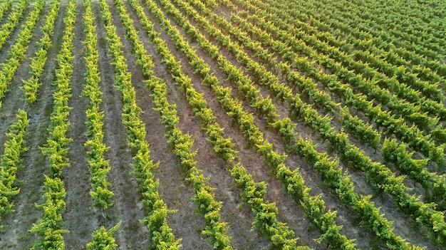 Воздушная вид сверху виноградников пейзаж сверху фон, южная франция