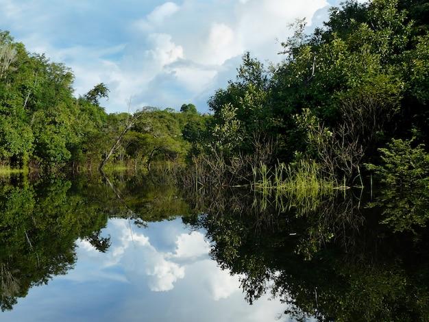 ブラジルのアマゾン川の反射