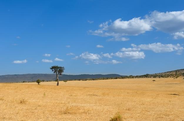 Африканский пейзаж саванны, национальный парк масаи мара, кения, африка