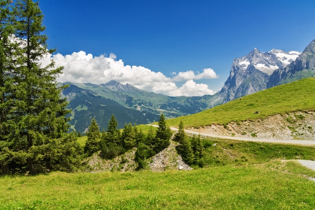 夏には、スイスの山々と美しい牧歌的なアルプスの風景