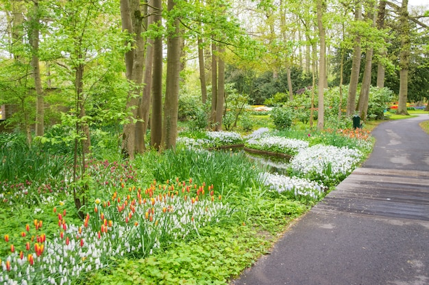 オランダの公園の美しい春のチューリップの花